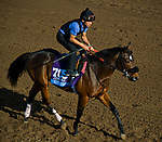 October 27, 2014:  Souper Colossal, trained by Eddie Plesa, exercises in preparation for the Sentient Jet Breeders' Cup Juvenile at Santa Anita Race Course in Arcadia, California on October 27, 2014. John Voorhees/ESW/CSM