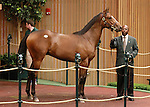 September 08, 2014:Hip #56 Tapit - Magical Feeling colt consigned by Dromoland sold for $500,000 to John Ferguson at the Keeneland September Yearling Sale.  Candice Chavez/ESW/CSM