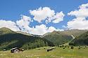 Hay barns in alpine meadow. Nordtirol, Austrian Alps, Austria, June.