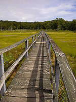 Walkway over grasses<br />