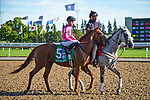 TORONT,CANADA-SEP 14: Got Stormy is post parading before the Woodbine Mile at Woodbine Race Track on September 14,2019 in Toronto,Ontario,Canada. Kaz Ishida/Eclipse Sportswire/CSM
