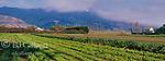 Coastal Fog, Bolinas Ridge, Star Route Organic Farm, Bolinas, Marin County, California