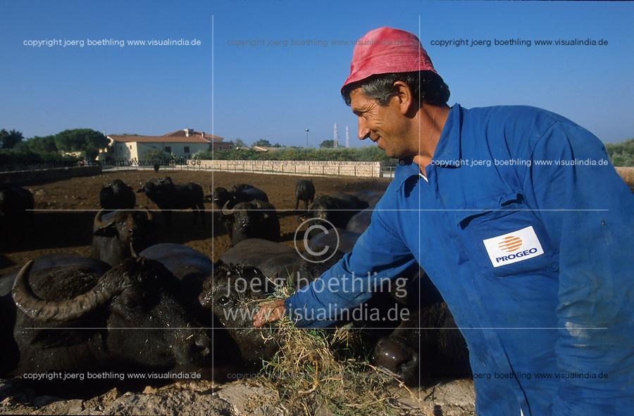 ITALY Campania, water buffalo farm and organic Mozzarella cheese production at Tenuta Vannulo near Paestum / ITALIEN Kampanien, Wasserbueffelhaltung und Mozzarella Bio Kaeserei Tenuta Vannulo bei Paestum