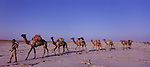 Afar salt caravans crunched in a long line across the salty surface of the Lake Asele in the heart of the northern Danakil. More than 300 feet below sea level, the salt lake and plains are one of the lowest points in Africa