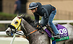 DEL MAR, CA - OCTOBER 29:  Hunt, owned by Mike House and trained by Philip D'Amato, exercises in preparation for Breeders' Cup Mile at Del Mar Thoroughbred Club on October 29, 2017 in Del Mar, California. (Photo by Alex Evers/Eclipse Sportswire/Breeders Cup)