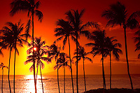 Sunset Palm Tree Silhouette