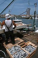 Europe/France/Aquitaine/64/Pyrénées-Atlantiques/Ciboure: Retour des bateaux de pêche à l'anchois