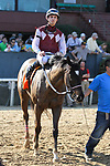 HOT SPRINGS, AR - March 18: Streamline #7 and jockey Chris Landeros are walked after winning the Azeri Stakes at Oaklawn Park on March 18, 2017 in Hot Springs, AR. (Photo by Ciara Bowen/Eclipse Sportswire/Getty Images)