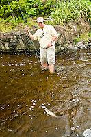 Fly fisherman landing a small rainbow trout while fishing a small tannine river of the island of Flores at the Azores.