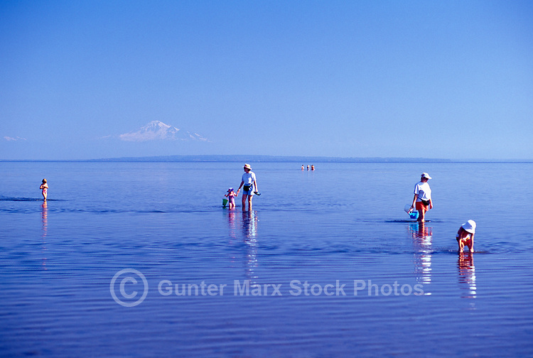 Mothers and Daughters walking in Water of Pacific Ocean, Boundary Bay Regional Park, Delta, BC, British Columbia, Canada - Mount Baker, Washington, USA on Horizon