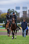FUCHU,JAPAN-NOVEMBER 23: Iquitos,trained by Hans-Jurgen Groschel,exercises in preparation for the Japan Cup at Tokyo Racecourse on November 23,2016 in Fuchu,Tokyo,Japan (Photo by Kaz Ishida/Eclipse Sportswire/Getty Images)