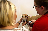 Volunteers, Kyle Driver (left) and<br /> Ruth Ramsey give a greyhound a bath at Greyhound Pets, Inc. in Woodinville, WA a couple days after their arrival from a cross country journey that originally began in Florida, on June 21, 2015.