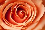 Portfolio of Northwest Flower Images