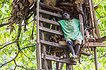Batwa Pygmy On Tree Ladder