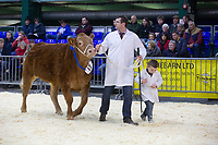 English Winter Fair 2018 & The National Pedigree Calf Show held at the Staffordshire & Birmingham Agricultural Society, County Showground,Stafford<br /> ©Tim Scrivener Photographer 07850 303986<br />      ....Covering Agriculture In The UK....