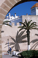 Afrique/Maghreb/Maroc/Essaouira : Les remparts de la cité et palmier