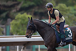 APR 25,2015:Smoking Sun,trained by Pascal Bary,prepares for the Audemars Piguet Queen Elizabeth 2nd Cup at Sha Tin in New Territories,Hong Kong. Kazushi Ishida/ESW/CSM