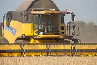 13-8-2021 Harvesting Spring Barley<br /> ©Tim Scrivener Photographer 07850 303986<br />      ....Covering Agriculture In The UK....
