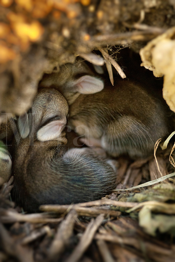 Newborn rabbits cuddle in hole.