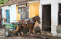 27/07/18<br /> <br /> A horse (with tongue hanging out) stands outside colourful house, Trinidad, Cuba.<br /> <br /> All Rights Reserved, F Stop Press Ltd. (0)1335 344240 +44 (0)7765 242650  www.fstoppress.com rod@fstoppress.com