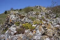 Fels, felsiger Trockenrasen, bei Bopfingen, Schwäbische Alb, Deutschland