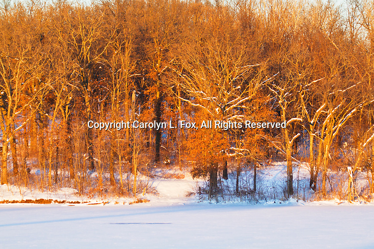 Bare trees glow in the late afternoon sunlight.