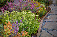 Sedum 'Autumn Joy' by stone path in summer-dry drought tolerant perennial garden