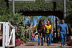 DEL MAR,CA-SEPTEMBER 05: Klimt is entering the paddock before the Del Mar Futurity at Del Mar Race Track on September 05,2016 in Del Mar,California (Photo by Kaz Ishida/Eclipse Sportswire/Getty Images)