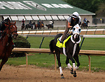LOUISVILLE, KY - APRIL 20: Tom's Ready (More Than Ready x Goodbye Stranger, by Broad Brush) gallops with exercise rider Emerson Chavez at Churchill Downs, Louisville KY. Owner G M B Racing, trainer Dallas Stewart.<br />  (Photo by Mary M. Meek/Eclipse Sportswire/Getty Images)