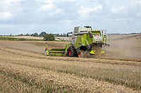 Combining wheat with Class Montana (hillside) combines - Lincolnshire, September