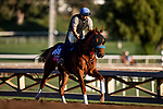 OCT 26: Breeders' Cup Juvenile Fillies Turf entrant Fair Maiden, trained by Eoin G. Harty,  gallops at Santa Anita Park in Arcadia, California on Oct 26, 2019. Evers/Eclipse Sportswire/Breeders' Cup