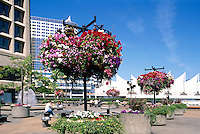 "Vancouver, BC, British Columbia, Canada - Hanging Flower Baskets at ""Granville Square"", overlooking ""Canada Place"" Trade and Convention Centre, Summer"