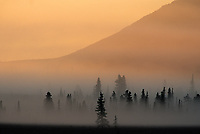 Fog over taiga, Denali National park, Alaska
