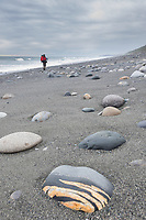Hiker on the beach of the Gulf of Alaska, Pacific ocean coast, Glacier Bay National Park, Southeast, Alaska