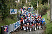 peloton driven by Team trek-Segafredo up the first passage of the Oude Kwaremont<br /> <br /> 104th Ronde van Vlaanderen 2020 (1.UWT)<br /> 1 day race from Antwerpen to Oudenaarde (BEL/243km) <br /> <br /> ©kramon