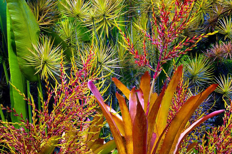 Mixed tropical flora. Hawaii Tropical Botanical Gardens. Hawaii, The Big Island.