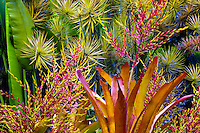 Mixed tropical flora. Hawaii Tropical Botanical Gardens. Hawaii, The Big Island.