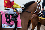 HALLANDALE BEACH, FL - March 31: Audible, #8, parades onto the track with John Velazquez aboard for Trainer Todd Pletcher before the Grade I Xpressbet Florida Derby at Gulfstream Park on March 31, 2018 in Hallandale Beach, FL. (Photo by Carson Dennis/Eclipse Sportswire/Getty Images.)