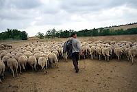 REPUBLIC OF MOLDOVA, Gagauzia, Vulcanesti, 2009/06/30..Pantel Kirilovitch CERNEVES, the stepfather of Viera, has forty sheeps. The herd includes animals than a dozen owners. Today is the turn of Pantel trafficking and to recover the milk to make cheese..© Bruno Cogez / Est&Ost Photography..REPUBLIQUE MOLDAVE, Gagaouzie, Vulcanesti, 30/06/2009..Pantele Kirilovitch Cernev, le beau père de Viera, possède une quarantaine de brebis. Le troupeau regroupe les bêtes d'une dizaine de propriétaires. Aujourd'hui, c'est au tour de Pantele de faire la traite et de récupérer le lait pour faire du fromage..© Bruno Cogez / Est&Ost Photography
