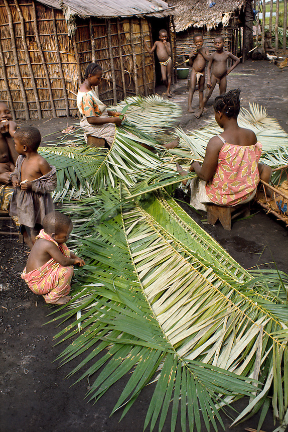 Women of Libinza tribe weaving palm leaves to make thatch roof, Ngiri river region, Democratic Republic of the Congo (ex-Zaire), Africa.