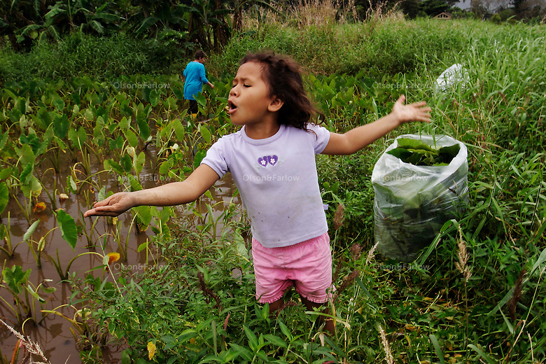 Mikala Santos plays in the taro patch while her grandmother, Gladys Kanoa harvests leaves for sale in a local restaurant. Taro is a traditional crop, highly valued by native Hawaiians as <br /> a food staple.