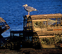 Traditional wooden lobster traps.