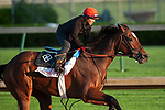 LOUISVILLE, KY - APRIL 28: Coach Rocks, trained by Dale Romans, exercises in preparation for the Kentucky Oaks at Churchill Downs on April 28, 2018 in Louisville, Kentucky. (Photo by Eric Patterson/Eclipse Sportswire/Getty Images)