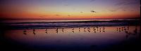 Sunset, Santa Monica Beach with seagulls.
