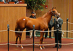 September 15, 2015: Hip 275 Distorted Humor - Forbidden Gift filly consigned by Gainesway.   Candice Chavez/ESW/CSM