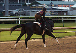April 30, 2015  Honor Code, who was pointed toward last year's Kentucky Derby, gallops in preparation for the G2 Alysheba Stakes at Churchill Downs.   ©Mary M. Meek/ESW/CSM