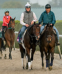 January 23, 2020: Omaha Beach heads back to the barn after galloping as horses prepare for the Pegasus World Cup Invitational at Gulfstream Park Race Track in Hallandale Beach, Florida. Scott Serio/Eclipse Sportswire/CSM