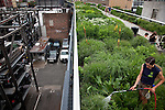 A city gardner waters flowers along the High Line which is a public park built on a 1.45-mile-long elevated rail structure running from Gansevoort Street to West 34th Street on Manhattan's West Side New York City.