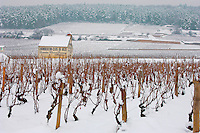 Vineyards in the snow. Chambertin Clos de Vin - Cote D'or, beaune, France.