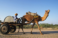 "Asien Indien IND Rajasthan Tilonia , Landwirtschaft Wassertransport mit Kamel Wagen - Wasser Trockenheit Duerre Steppe Tiere Tier Mensch Transport Tank Wassertank Wasserknappheit xagndaz | .Asia India Rajasthan , water transport farmer with water tanker powered by Camel - drought water agriculture animal third world climate.| [copyright  (c) agenda / Joerg Boethling , Veroeffentlichung nur gegen Honorar und Belegexemplar an / royalties to: agenda  Rothestr. 66  D-22765 Hamburg  ph. ++49 40 391 907 14  e-mail: boethling@agenda-fototext.de  www.agenda-fototext.de  Bank: Hamburger Sparkasse BLZ 200 505 50 kto. 1281 120 178  IBAN: DE96 2005 0550 1281 1201 78 BIC: ""HASPDEHH""] [#0,26,121#]"